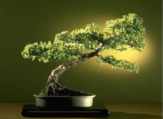 Origem do Bonsai